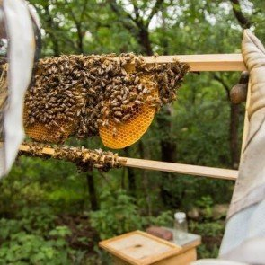 Two Hives Honey Honey bees