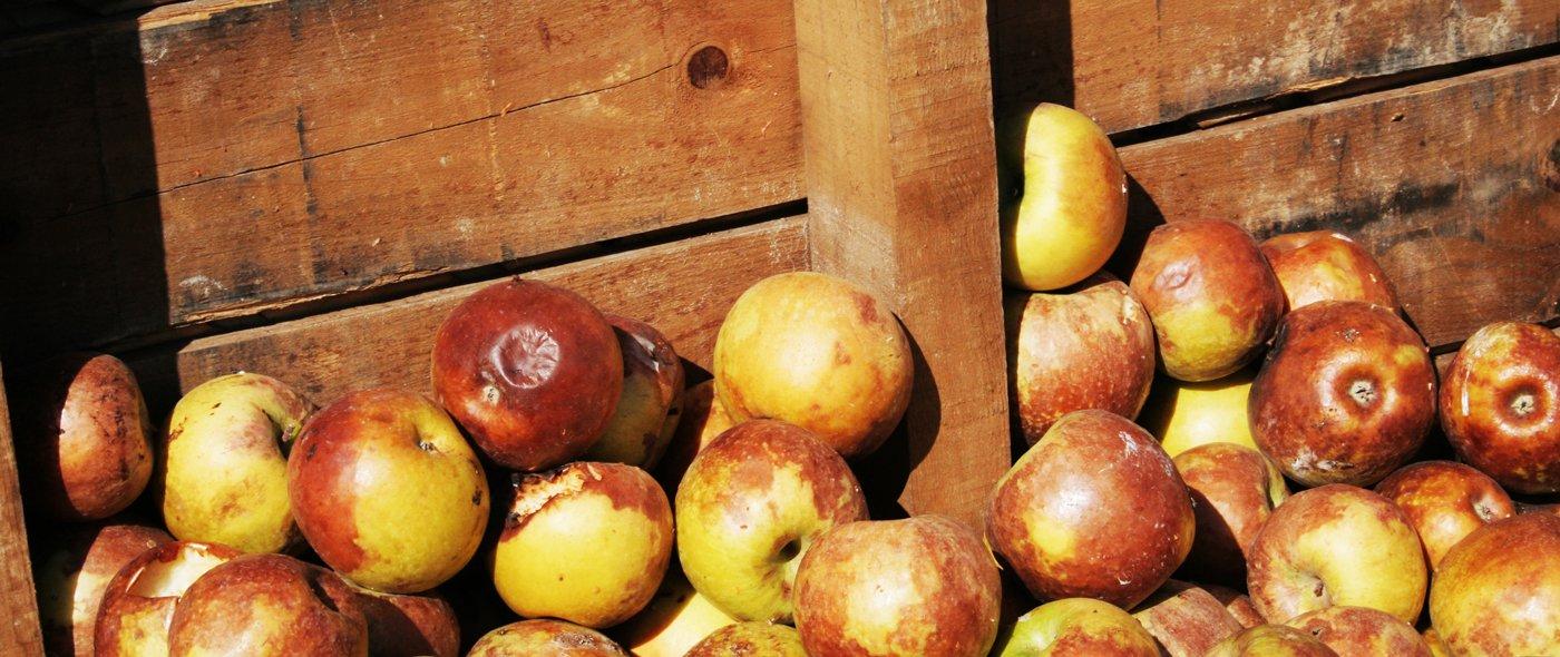 Rotten Apples - Food Waste